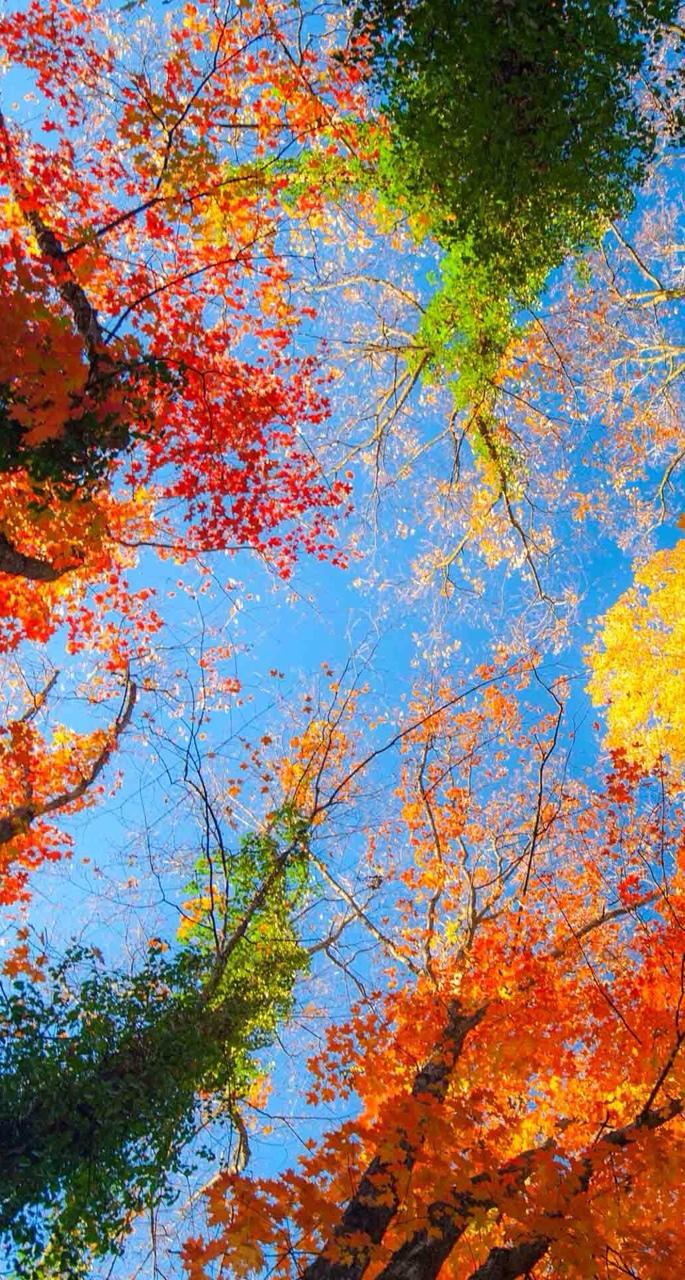Nature iPhone 6 wallpaper